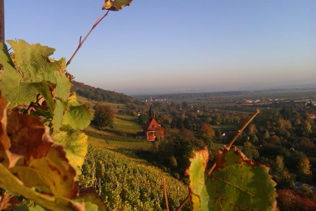 Pillnitzer Weinberg im Herbst