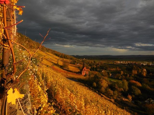 Pillnitzer Königlicher Weinberg in der Abenddämmerung